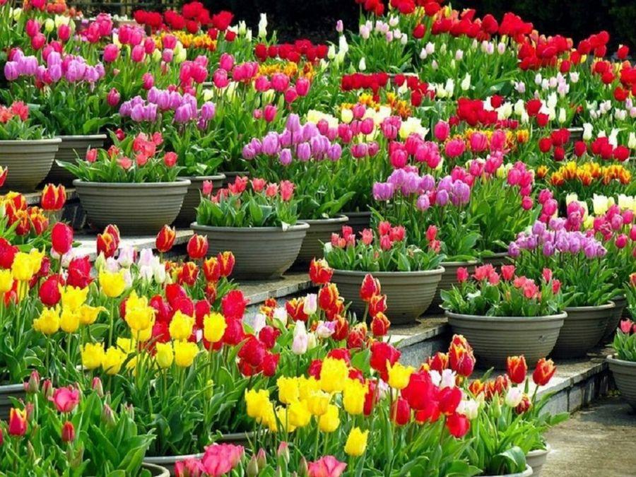 nombres para florerias