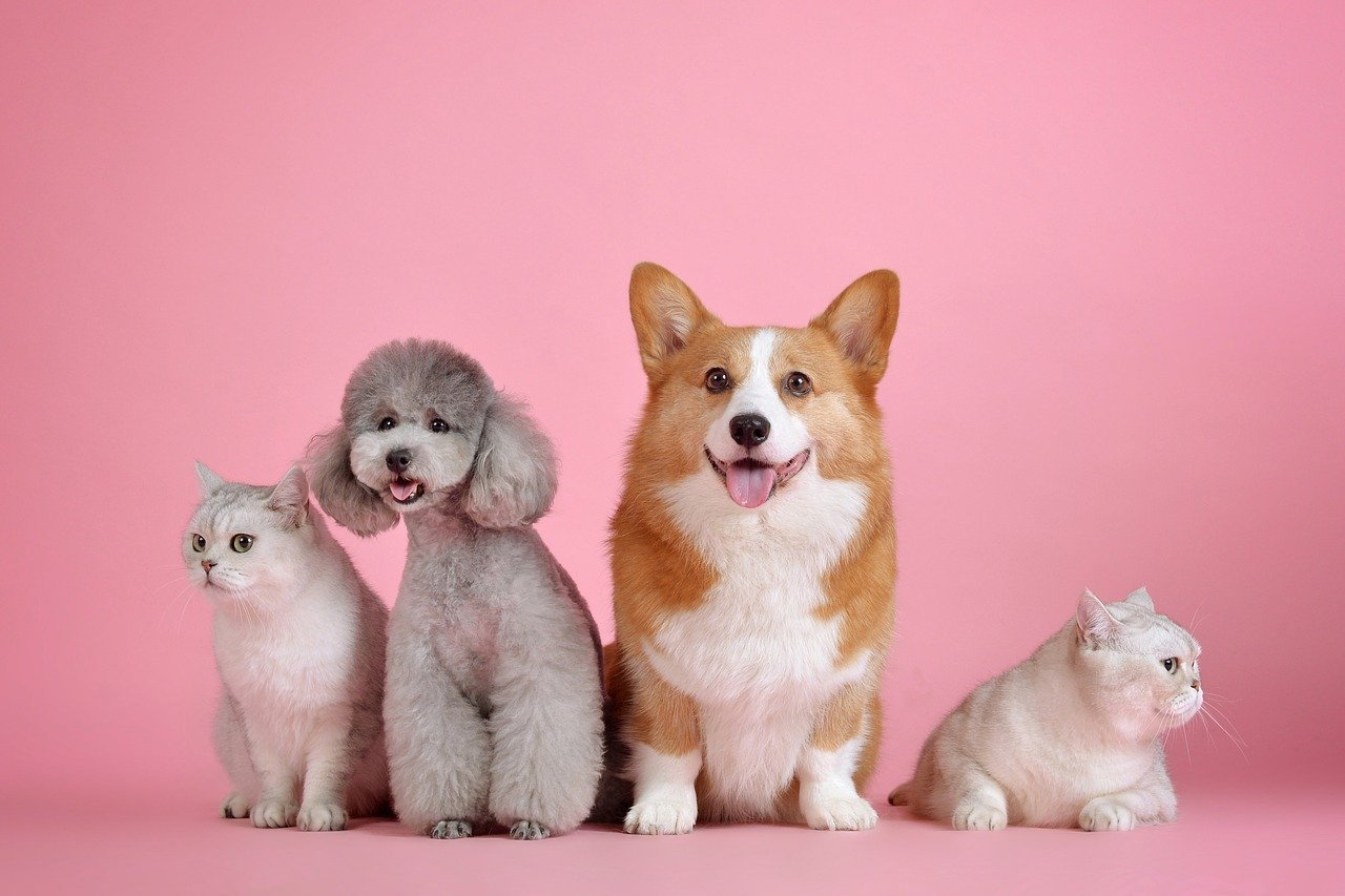 mascotas en conjunto